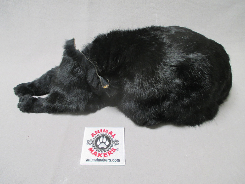Salem the Cat, lying down skin for animatronic core - no head. (pricing is for skins only)