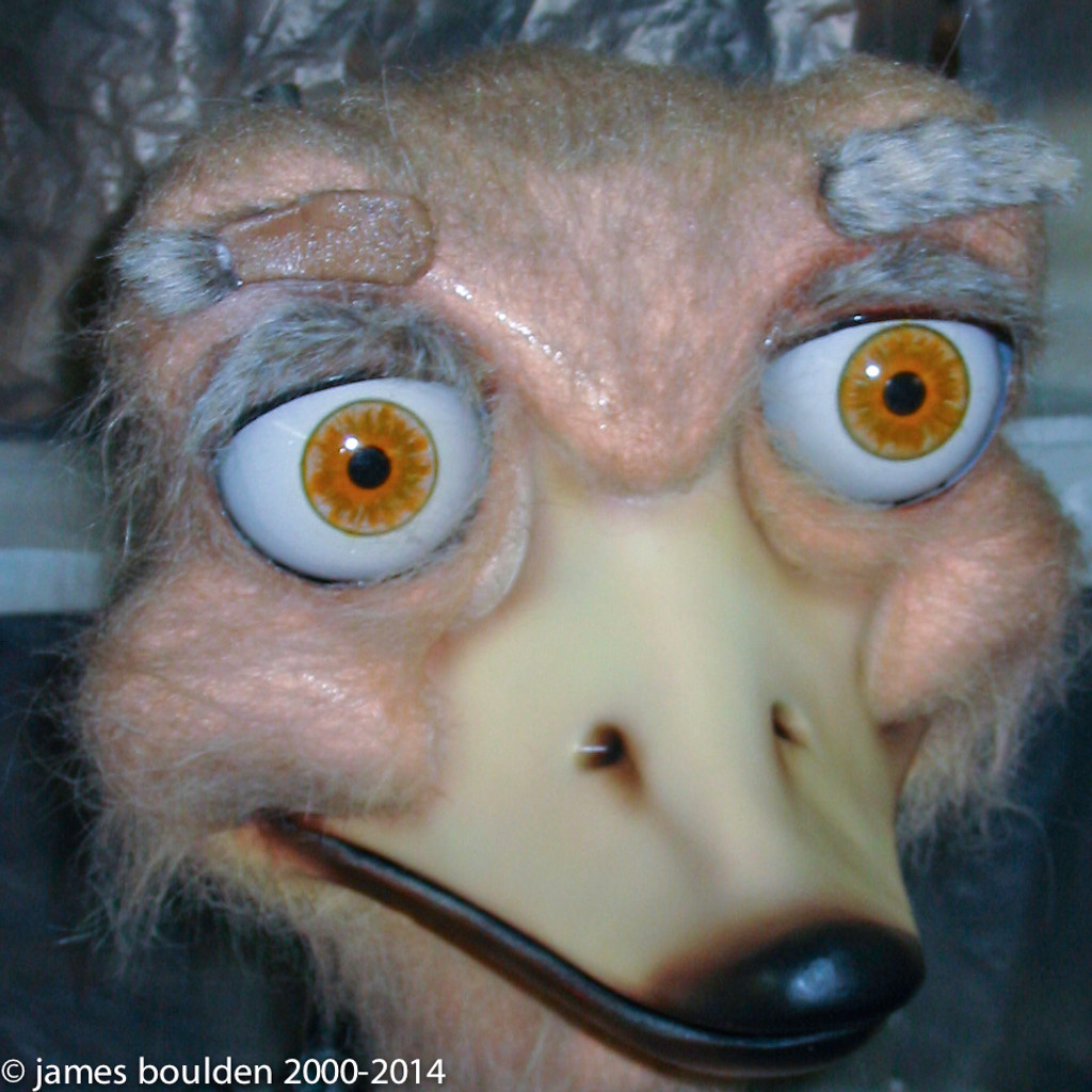 Ostrich face of this animated costume.