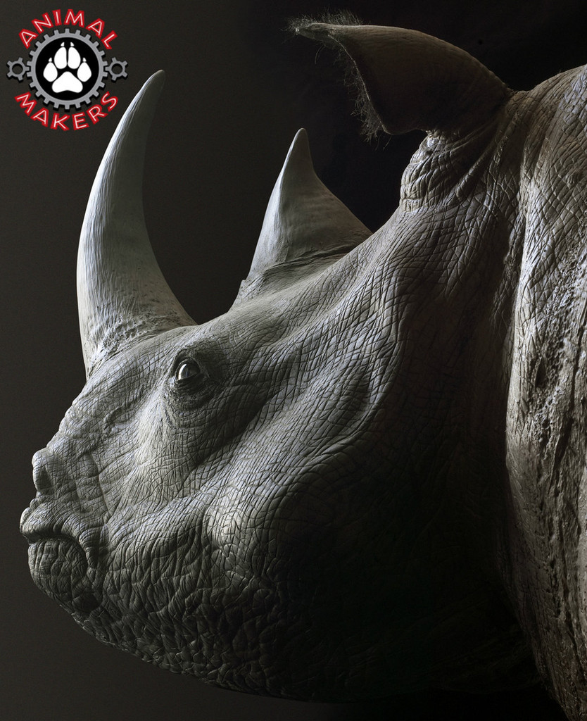 This rhino has an amazing face!