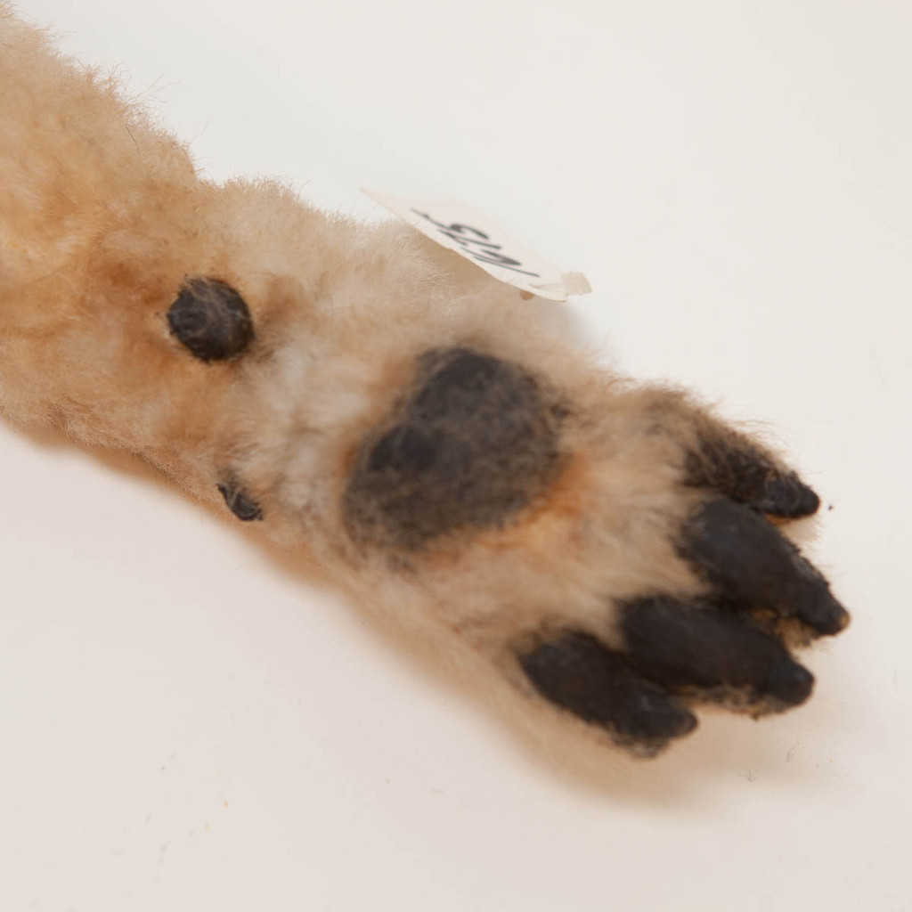 Realistic Medium Sized Dog Paw Movie Prop in Tan Brown