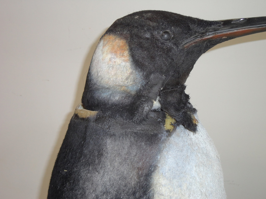 Adele Penguin Movie Prop Replica 2