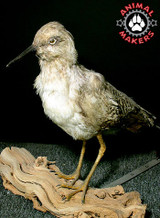 Animatronic bird model by Animal Makers