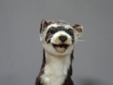 Animated weasel or ferret puppet for movie and film shots