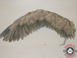 These wings are able to be flapped in a scene
