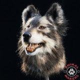 artificial, realistic wolf replica head