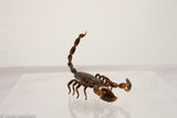 Predatory scorpion model images available for your online or media project, in 4K resolution.