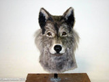 Wolf / dog mask for a person to wear.