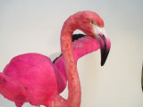 pink flamingo animated replica