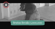Brutus Breaks 3,000,000 Views For One Video