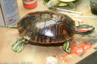 red eared slider turtle unpainted blank (with an optional paint job)