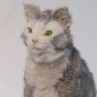 Realistic Life-Sized Sitting Grey Cat Movie Prop