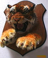 Tiger Head & Paws