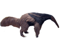 Realistic, life-sized anteater replica