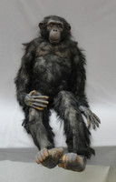 Chimp Prop