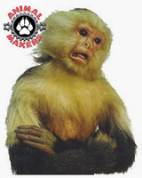 Realistic, Life-Sized Capuchin Monkey with a Posing Mouth