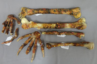 Scary Movie 2 movie prop skeleton bones of hands and arms