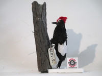 Animated Woodpecker Bird Puppet
