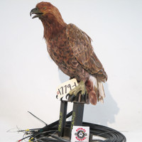 Brown eagle puppet animatronic on stand