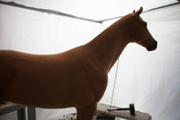 Realistic Standing Horse Replica Made to Order