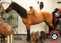 Realistic, full-size, standing horse replica with steel armature.