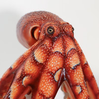Realistic octopus replica created in silicone from original sculpture and molds.  100% made in California!