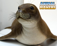 Hawaiian Monk Seal Adult Replica
