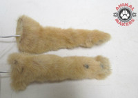 Cat paws small tan