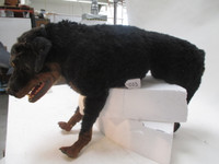 Rottweiler realistic dead dog replica movie prop