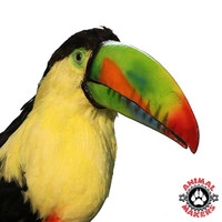 Pretty Toucan adds interest and fun!