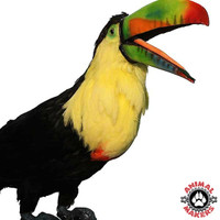Toucan's mouth animation is realistic and fun to watch!