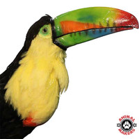 Animated Toucan Replica