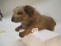 Collectible Screen Used Ugly Dog Prop