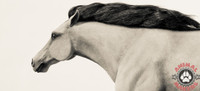 Life Sized Wild Stampeding Mustang Horse Sculpture