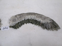 Seagull wing set accessory to Seagull Prop 4026-1