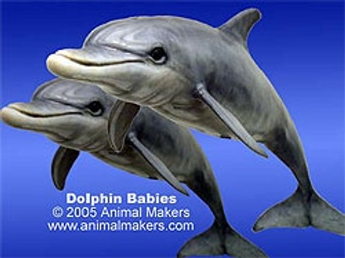 Baby dolphin replica by Animal Makers