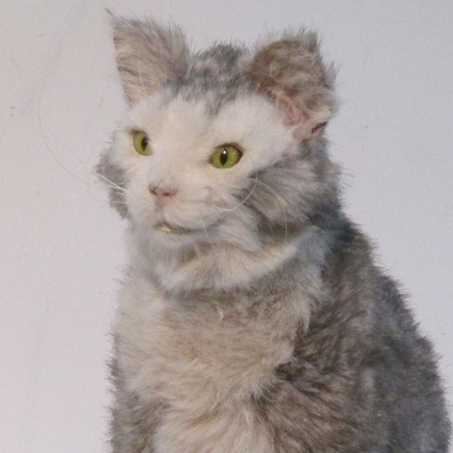 Cruelty Free, Realistic, Cat Replicas by Animal Makers