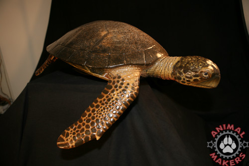Painted version of this hawksbill turtle replica