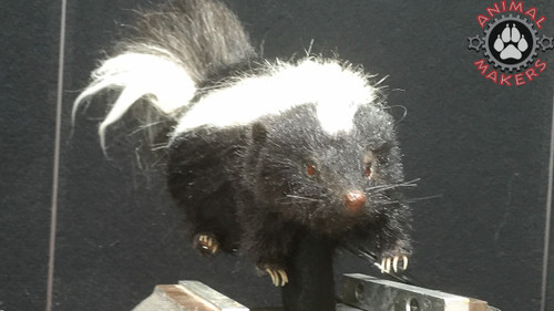animated skunk puppet with cable controlled movements including head and neck, tail twitches, and tail lift.