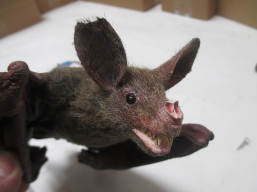 Vampire bat for film or displays.