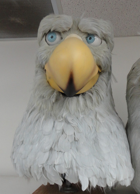 Skinny eagle animatronic head