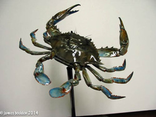 Realistic Blue Crab Replica with Poseable Legs