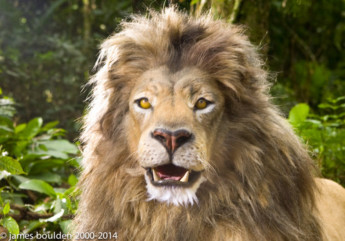 Animatronic Lion Head Puppet