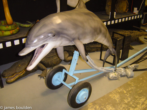 Common Bottlenosed Dolphin Puppet