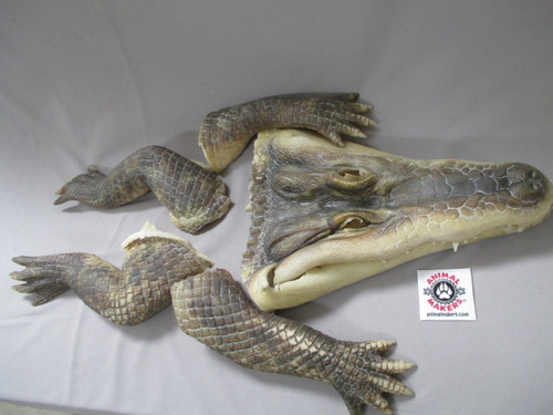 Alligator arms, legs, and head used