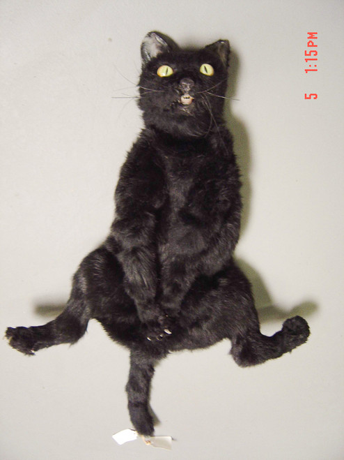 "Flexible black cat puppet, the ""nut buster"" from Scary Movie 2"