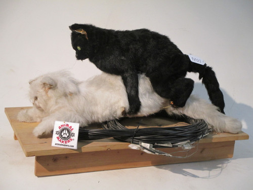 Realistic Life Sized Cat Couple Puppet Rig