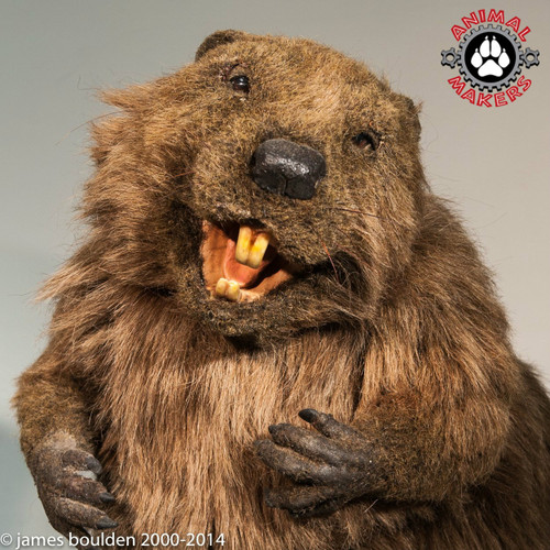 Realistic Beaver Hand Puppet Freddy