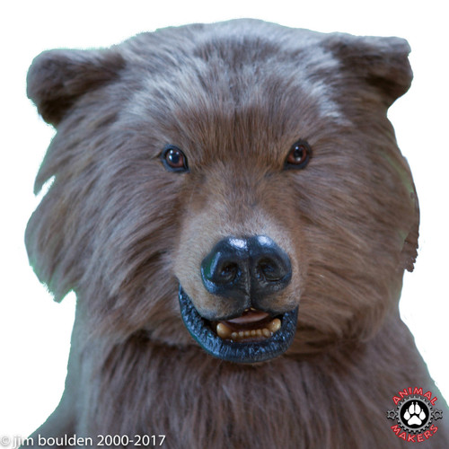 Boo Boo the Millennial Bear!