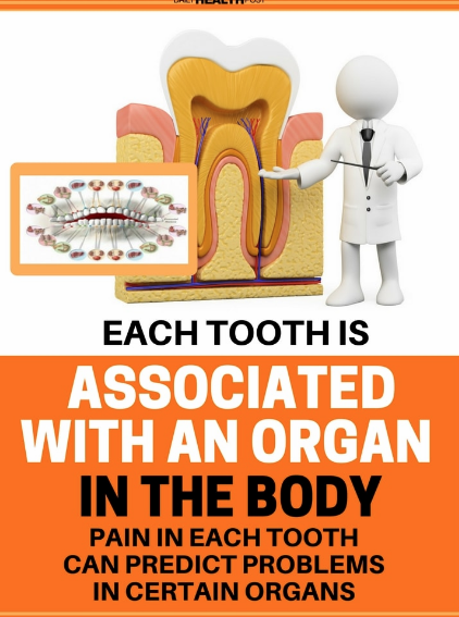 How are teeth connected to the health of the brain, the pancreas, the liver, the thyroid and more?