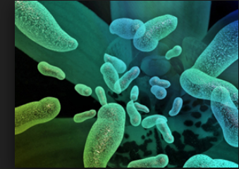 What is most effective for removing biofilms and bacteria?